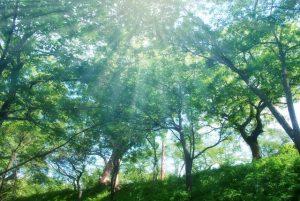 自然好きな保育士さんには森林インストラクターがおすすめ!資格保有者が資格のメリットや勉強法まで全解説!